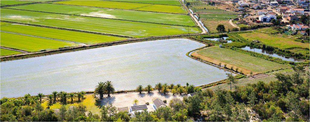arrozais Comporta